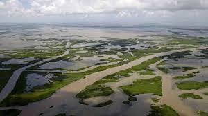 Louisiana Wetlands npr.org