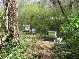 Backyard Apiary beekeepinglinda.blogspot.com