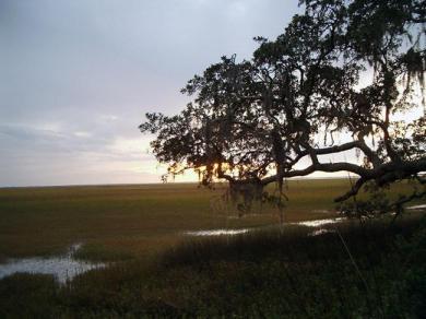 Tidal Marshlands georgiaencyclopedia.org