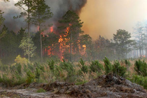 Okefenokee Swamp Fire